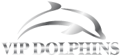 vipdolphins
